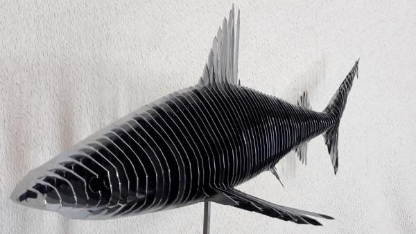 Requin chromé